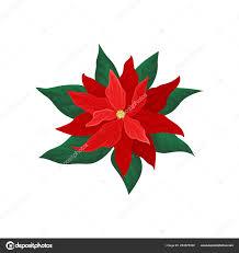 Weihnachtsstern Mit Leuchtend Roten Blüten Und Grünen