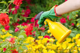 when to apply pesticides tips on using pesticides safely