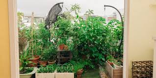how to start your own edible rooftop garden