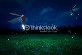 grass field at night. Real Fireflies On A Grass Field At Night : Stock Photo