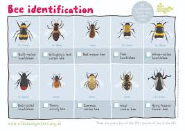Bee And Wasp Identification Chart Uk Wasps Bees Id Guide Spring To Early Summer We Get Calls For