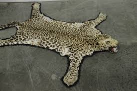 lot 68 a vintage full head mount leopard skin rug