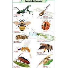 Beneficial Insects Chart India Beneficial Insects Chart