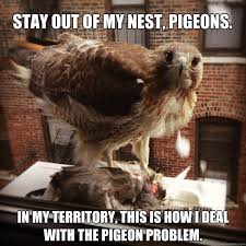 STAY OUT OF MY NEST, PIGEONS. In MY territory, this is how I deal ... via Relatably.com