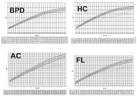 How Fetal Length And Weight Can Be Measured With Fetal