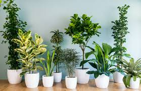 Indoor Plants Living Room Chic House Plants Tips On Care Sunset