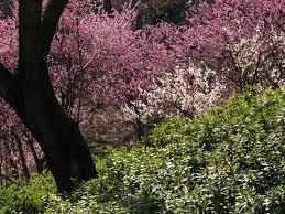 「西条市 市民の森」の画像検索結果