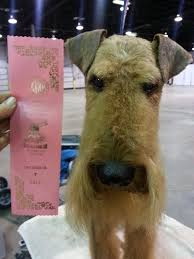 Airedale Weight Chart Airedale Head Grooming Pet Grooming Dog Grooming Tips