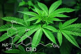 Image result for cbd industry