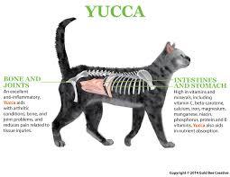 natural appetite stimulant for cats. Unique Appetite Yucca For Cats Throughout Natural Appetite Stimulant For Cats NHV Pet Products