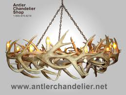luxury real antler chandelier elk mule deer round lighting winsome real antler