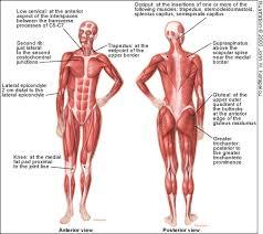 Fibromyalgia Chart Treating Fibromyalgia American Family Physician