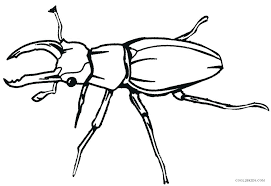 coloring pages insect coloring book page pages bug animal insects beetle for kids preschoolers free