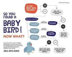 Baby Bird Age Chart How To Help Sick Baby Birds Portland Audubon