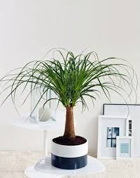 dekoideen feng shui plants for harmony and positive energy in the living room
