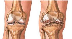 2 description orthopedic surgeon description