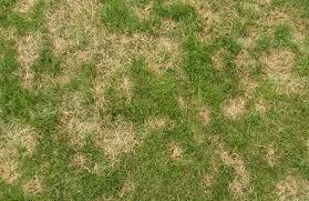 Lawn Disease Identification Control In Ohio