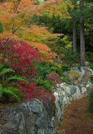 Small Picture Best 25 Japanese maple garden ideas on Pinterest Bloodgood