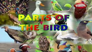 Birds Chart For Kindergarten Birds Body Parts Learn English Basics For Kids English Grammar For Children