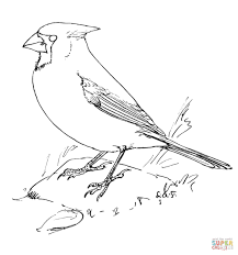 Northern cardinal coloring pages | Free Coloring Pages