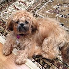 Treating a Dog Mold Allergy ..............Mold in the Home