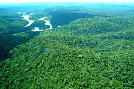 Resultado de imagem para Renca AMAZONINA