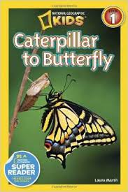 non fiction early reader series