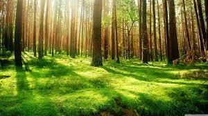 Forest Desktop Wallpapers - Top Free ...