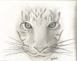 Sketches Animal Pictures Of Animals Sketches Pictures Of Nnature
