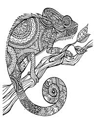 Free Coloring Page Coloring Adult Cameleon