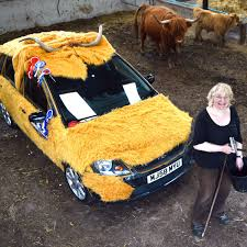 Ford Fiesta given a Highland cow makeover ahead of Mongolia charity trek -  Daily Record