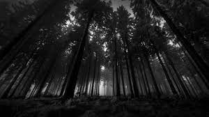 Nature Black Wallpapers - Top Free ...