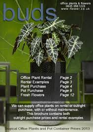 Tropical office plants Outdoor Officeplantslondon Trinityk8info Office Plants Interior Landscaping Tropical Office Plants Live