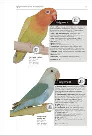 Lovebird Color Mutations Chart The Encyclopedia Of Agapornis Lovebirds Dr Alessandro D