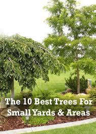Good Backyard Trees  Large And Beautiful Photos Photo To Select Good Trees For Backyard
