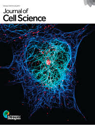 Lamins in the nuclear interior  life outside the lamina | Journal of Cell  Science