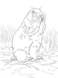 Black Tailed Prairie Dog Coloring Page Free Printable Coloring Pages