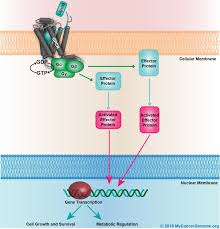 Gpcr Signaling G Protein Signaling My Cancer Genome