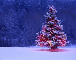 Christmas Trees Snow Winter 15397