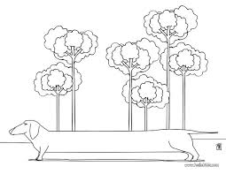 Dachshund Coloring Page Lps Dachshund Coloring Pages