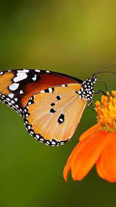Handy Wallpaper 2020 hd - Schmetterling ...