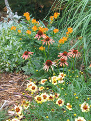 Small Picture Introduction to Perennial Garden Design Stepping Stones to