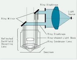 dark field microscopy reflected darkfield observation olympus ims