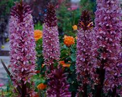 color garden. Color Garden