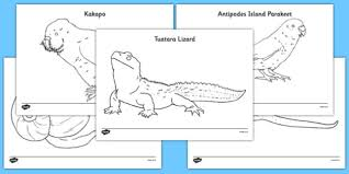 Small Picture Zealand Animals Colouring Pages