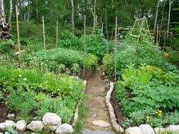 Kitchen Garden Companion Earth Heal Create An Oasis With Companion Planting