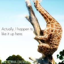 Funny Giraffe Pictures With Quotes Awesome Giraffe Quotes