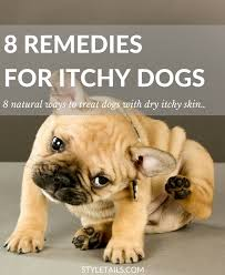 8 Natural Ways to Combat Dry Itchy Skin in Dogs | STYLETAILS