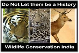 wildlife conservation in safeguarding the future the big question why protecting wildlife is need of the hour