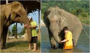 elephant car insurance number fresh elephant car insurance number awesome elephant crisis ivory